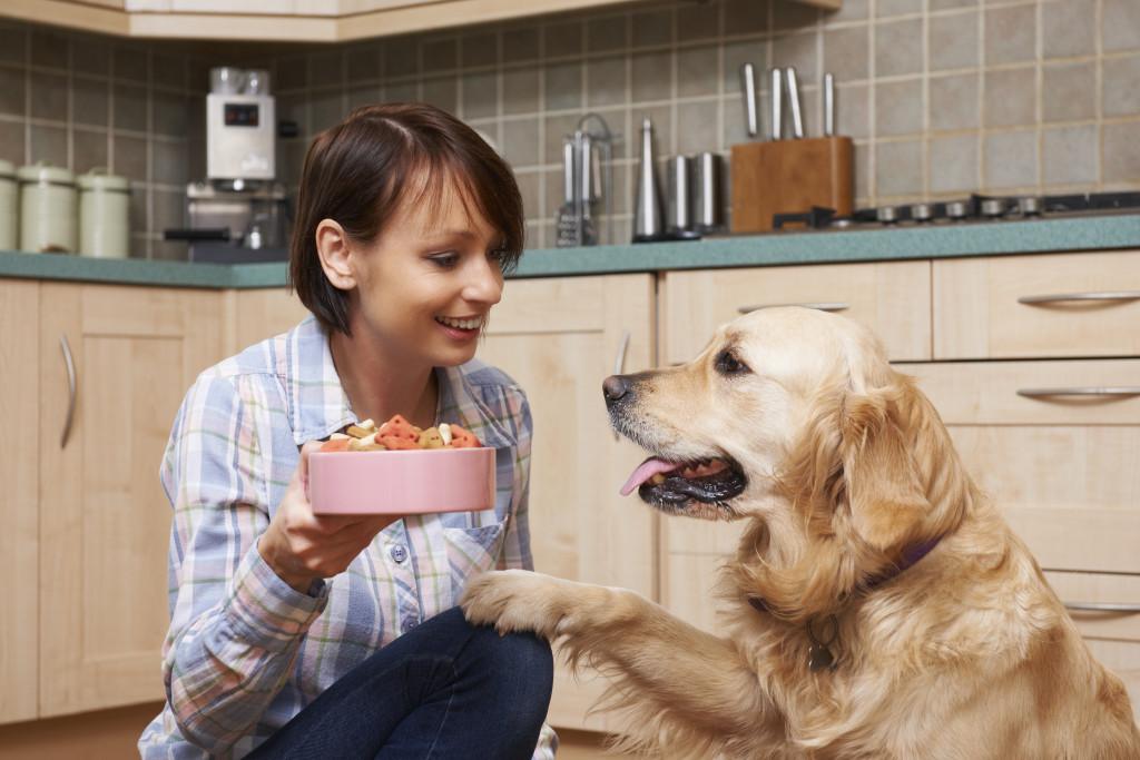 feeding dog on time